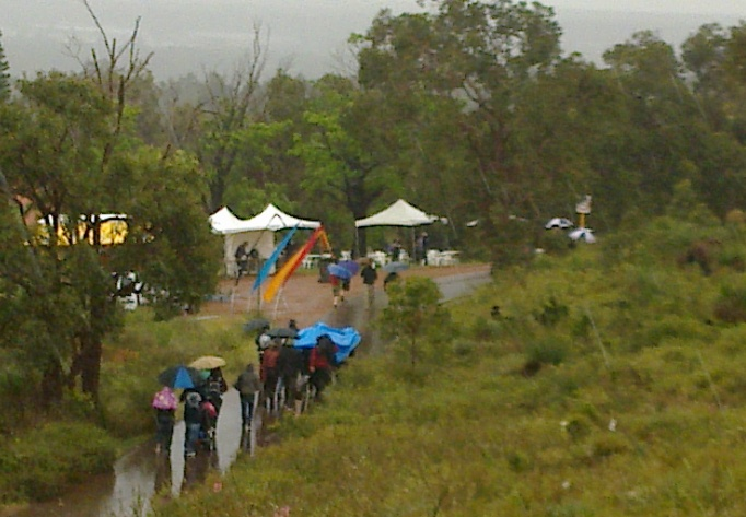 Chooks under a Blue Tarp in the rain at Walk the Zig Zag